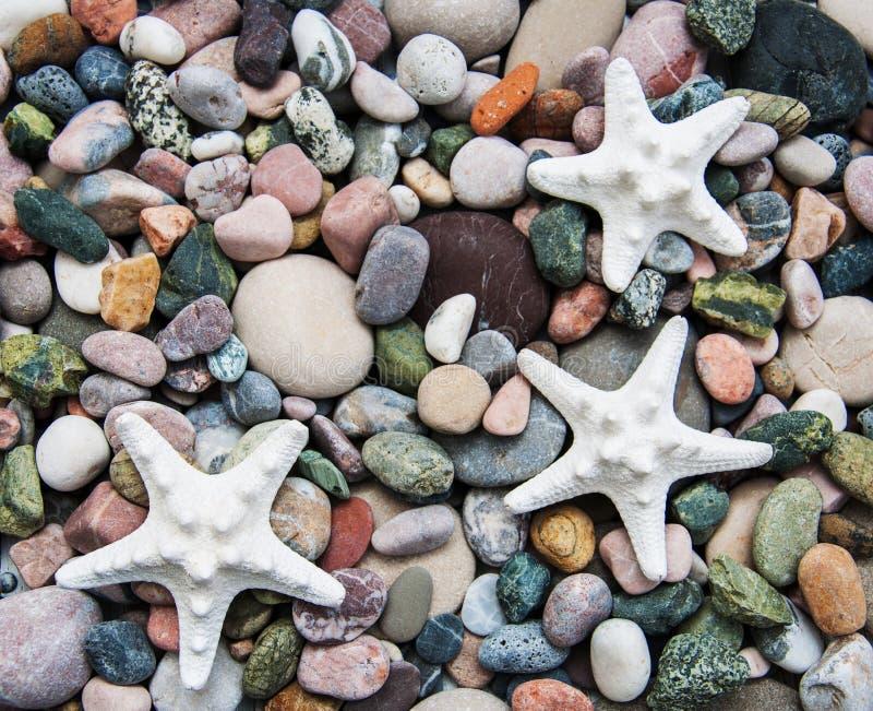 Камни и морские звёзды камешка моря стоковое фото