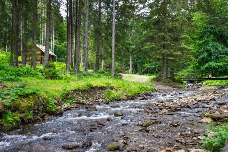 Камни и мох Riverwith в лесе стоковая фотография
