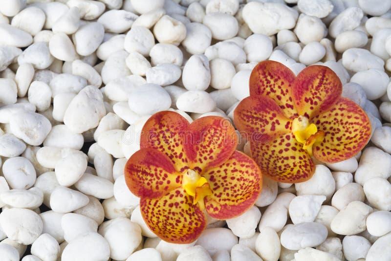 Камни и орхидея стоковые фотографии rf