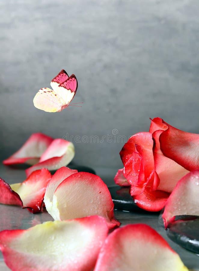Камни курорта и лепестки розы и бабочка над серой предпосылкой стоковые изображения rf