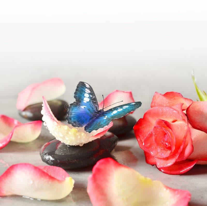 Камни курорта и лепестки розы и бабочка над серой предпосылкой стоковое фото