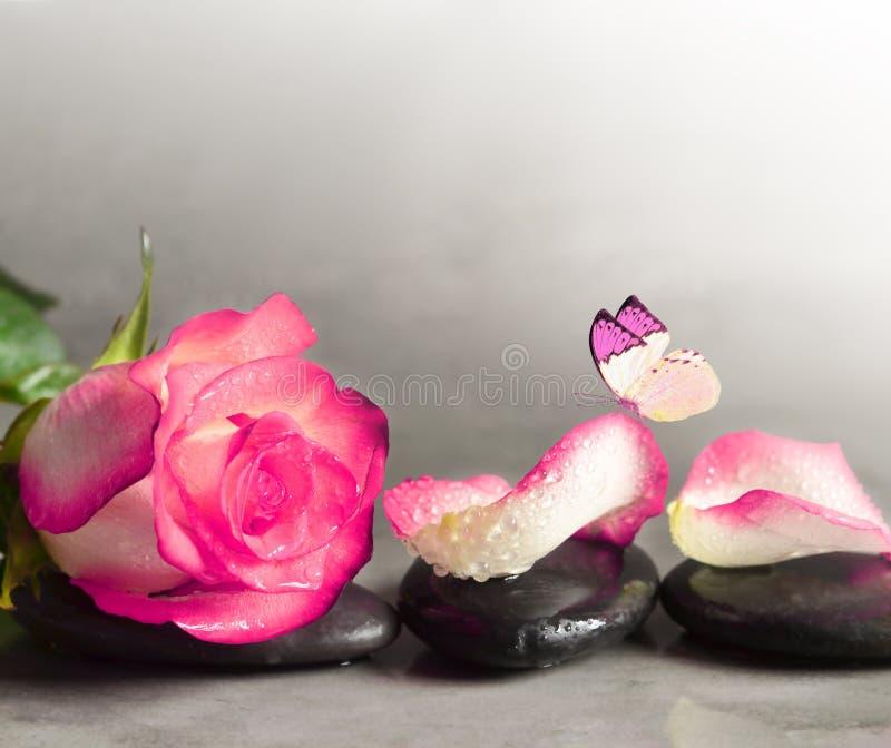 Камни курорта и лепестки розы и бабочка над серой предпосылкой стоковые фотографии rf