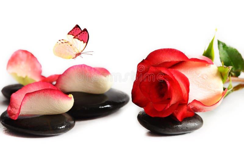 Камни курорта с розовыми цветком и бабочкой на белой предпосылке стоковые фото