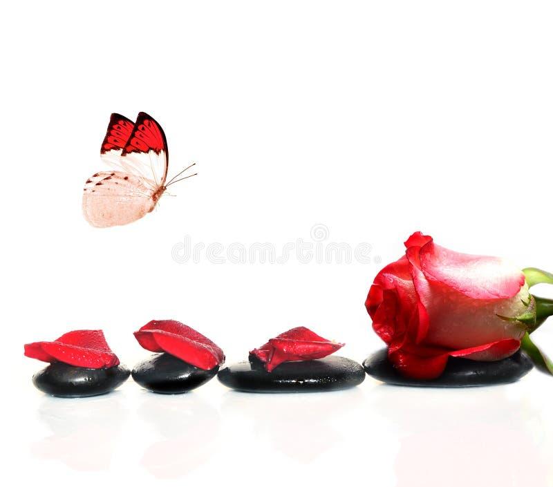 Камни курорта с розовыми цветком и бабочкой на белой предпосылке стоковые изображения