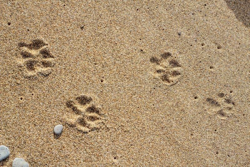 Камни на песке стоковые фотографии rf