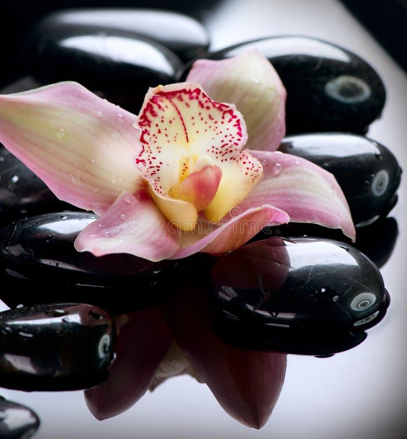 Камни спы и цветок орхидеи стоковое фото rf
