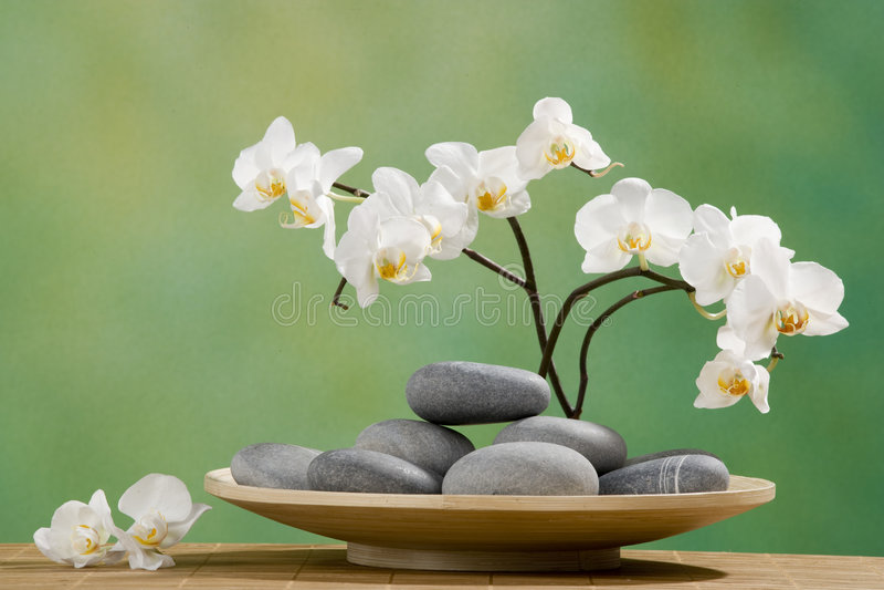 камни спы орхидеи стоковые изображения