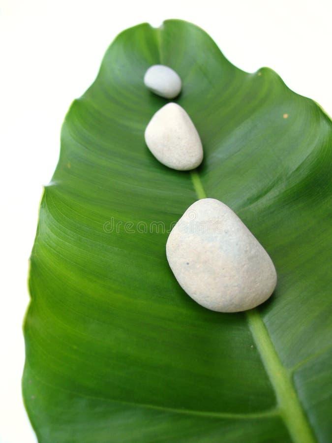 камушки листьев стоковая фотография