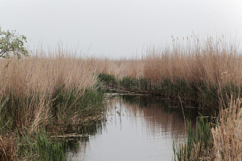 Канал на южный допустимый предел озера Neusiedler видит стоковое изображение
