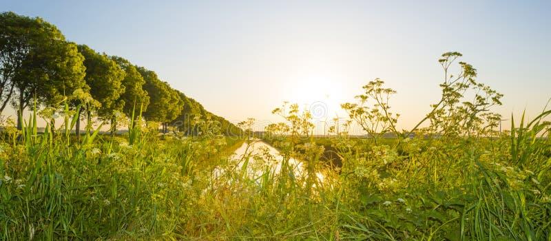 Канал пропускает через сельский ландшафт в свете восхода солнца стоковые изображения rf