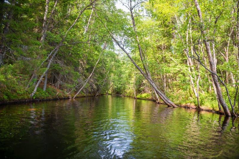 Канал проходит через лес стоковые фото