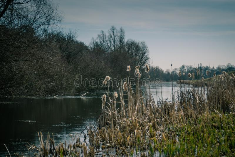 Канал с покрашенными кустарниками, осень болота стоковая фотография rf