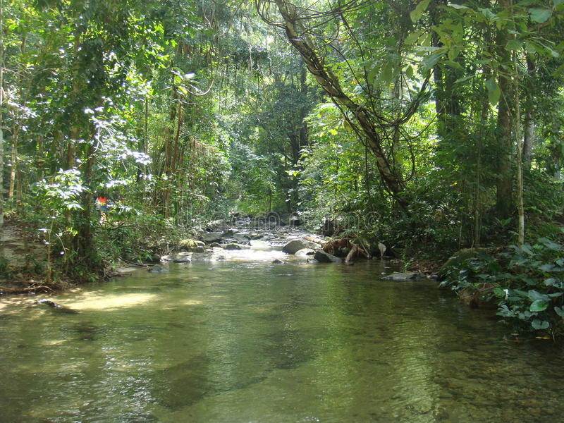Канал в джунглях стоковые изображения rf