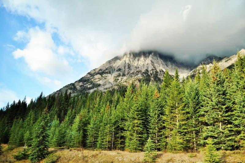Канадская природа - Альберта стоковая фотография rf