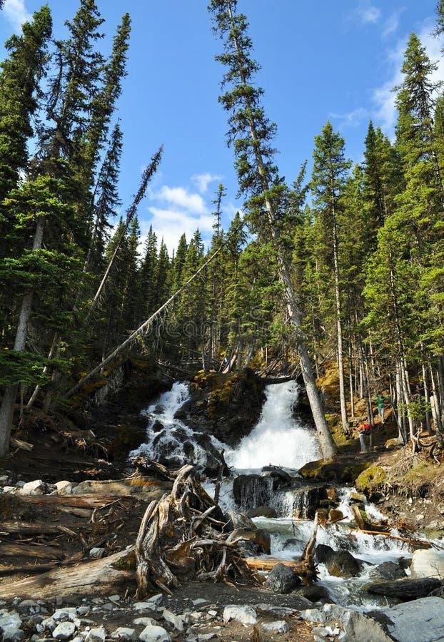 Канадская природа - водопад Kananaskis стоковые фотографии rf