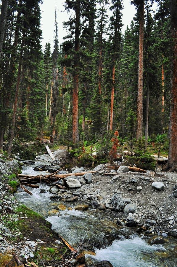 Канадская природа - Kananaskis стоковые изображения rf