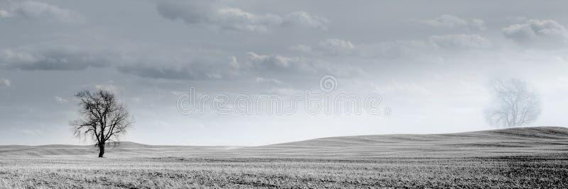 Канадское пшеничное поле прерий стоковое изображение