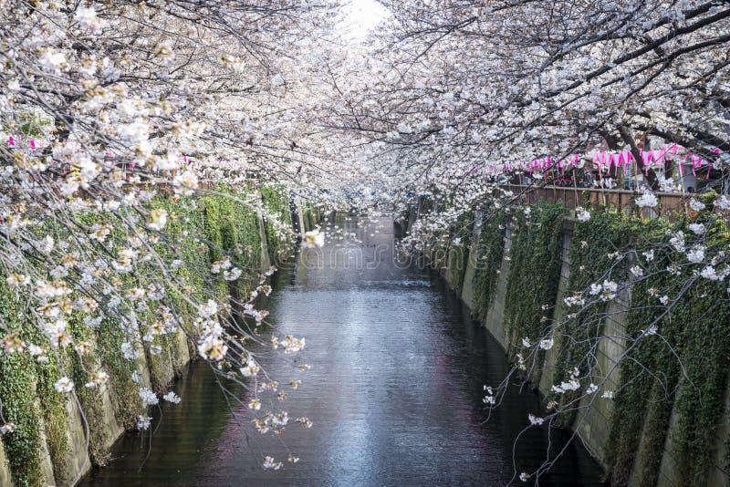 Канал Meguro стоковое изображение rf
