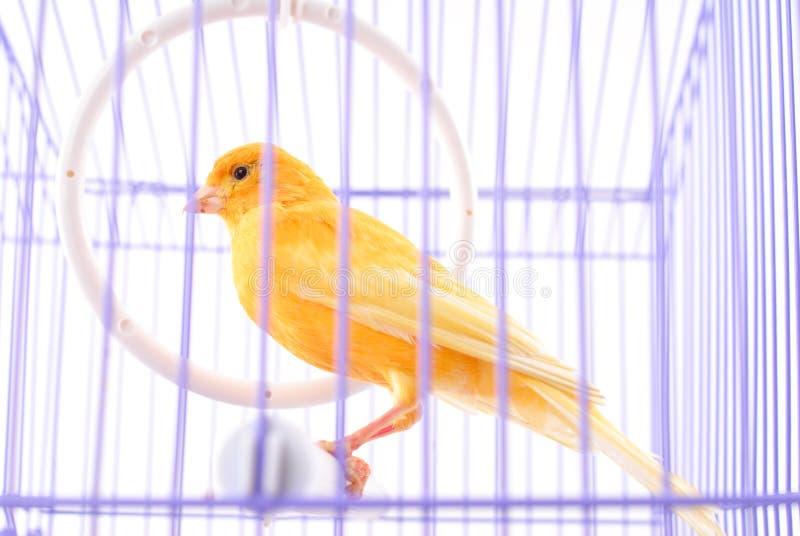 Картинка канарейка в клетке для детей