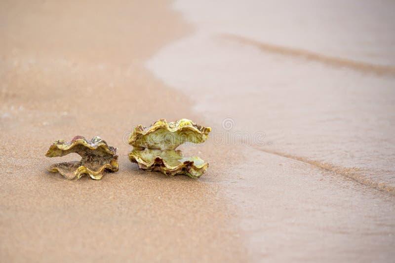 каникула раковины моря принципиальной схемы пляжа песочная стоковое изображение rf