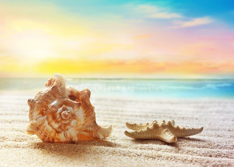 каникула раковины моря принципиальной схемы пляжа песочная стоковое изображение
