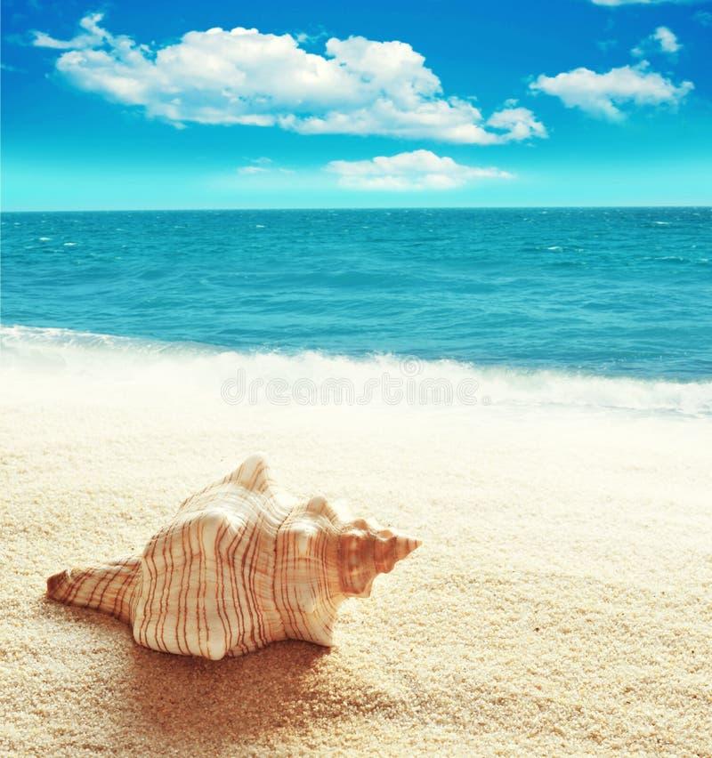 каникула раковины моря принципиальной схемы пляжа песочная стоковое фото rf
