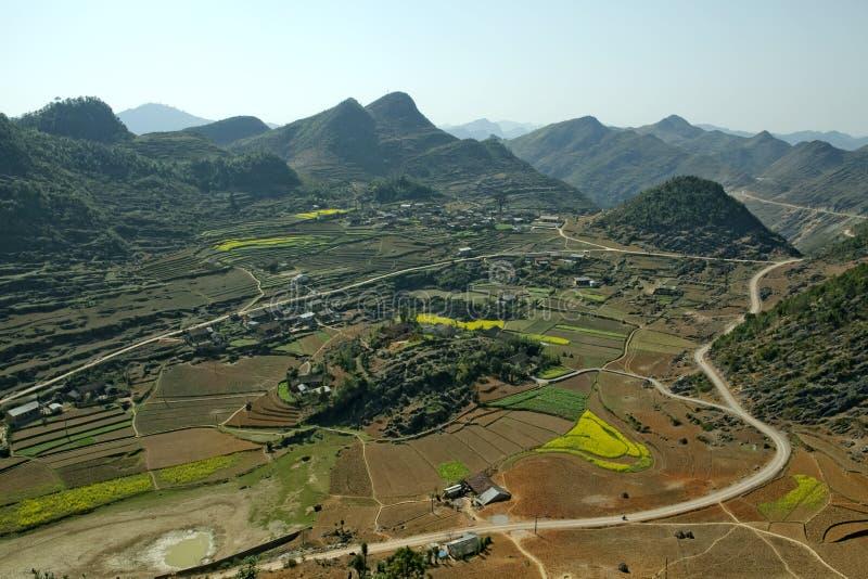 Канола поле в долине стоковое изображение