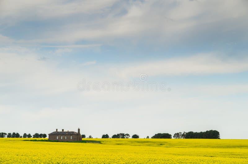 Канола поле около Ballarat стоковое изображение