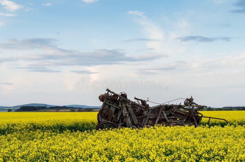 Канола поле около Ballarat стоковое фото