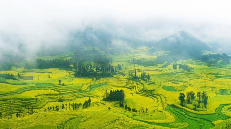 Канола поле, поле цветка рапса с туманом утра в Luoping стоковые фотографии rf