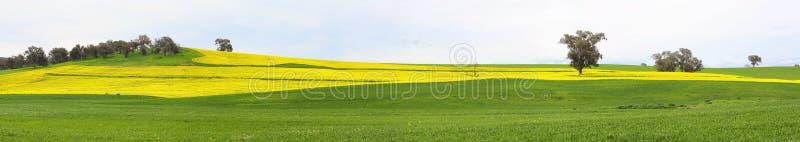 Канола поля и выгоны пасти стоковое изображение rf