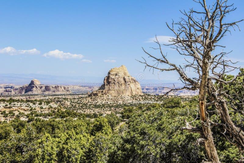 Каньоны пустыни стоковая фотография rf
