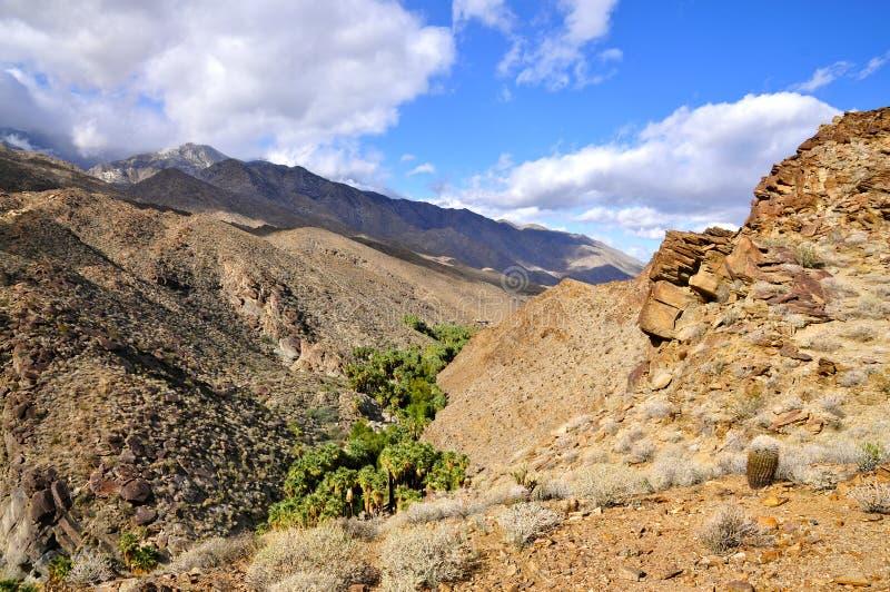 Каньон ладони, Palm Springs стоковое изображение