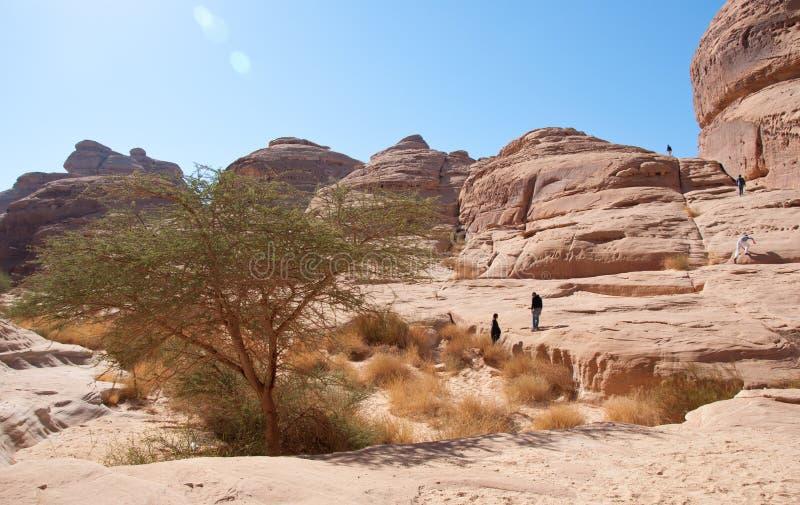 Каньон в археологических раскопках Madain Saleh Саудовской Аравии стоковые фотографии rf