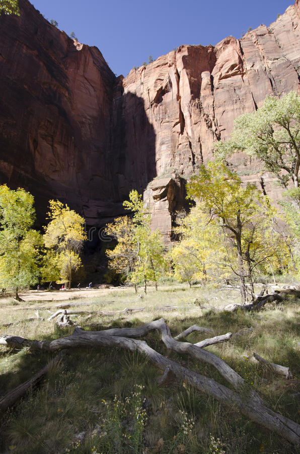 Каньон утеса с цветами осени стоковое изображение