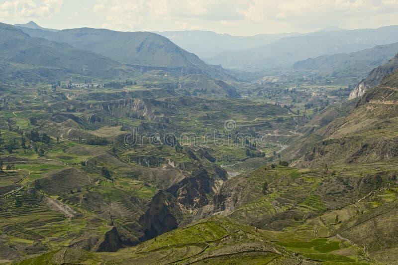 Каньон Colca стоковые изображения