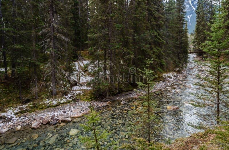 Каньон Johnston в национальном парке Banff, Альберте, Канаде стоковая фотография rf