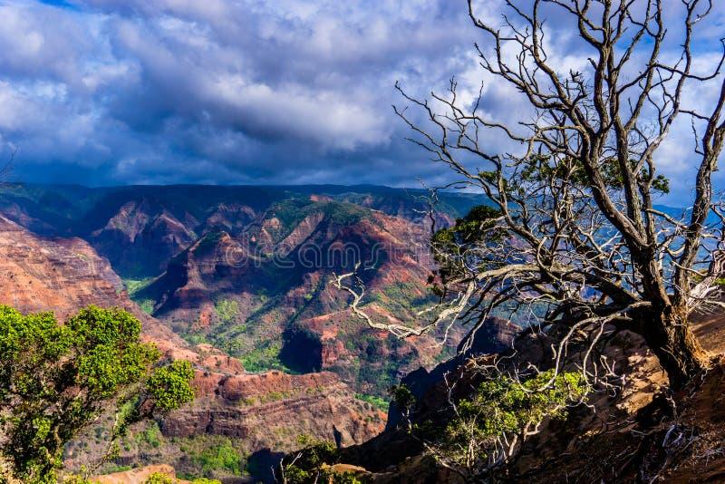 Каньон Waimea стоковое фото