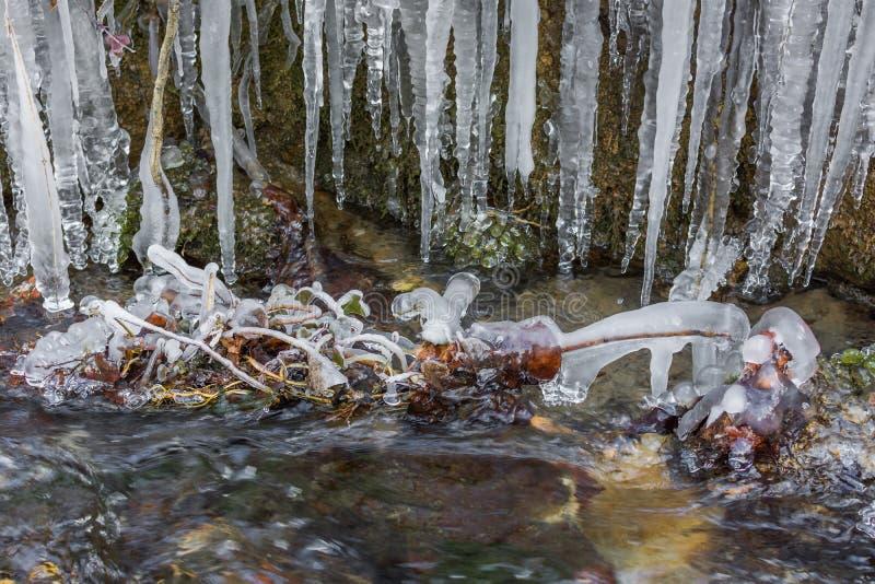 Капание замороженной воды в небольшом потоке реки стоковое фото
