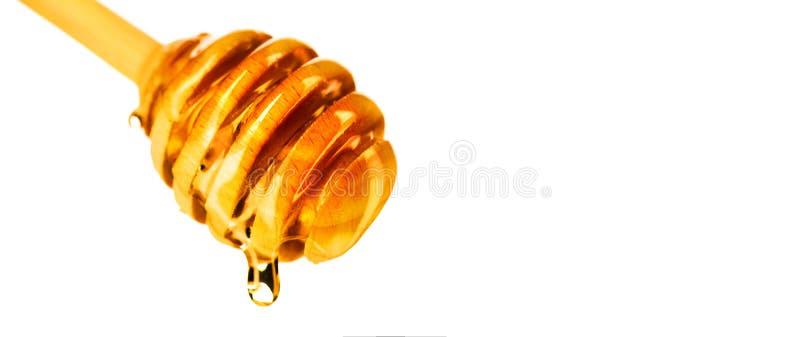 Капание меда от ковша меда изолированного на белой предпосылке Толстый мед окуная от деревянной ложки стоковые фото