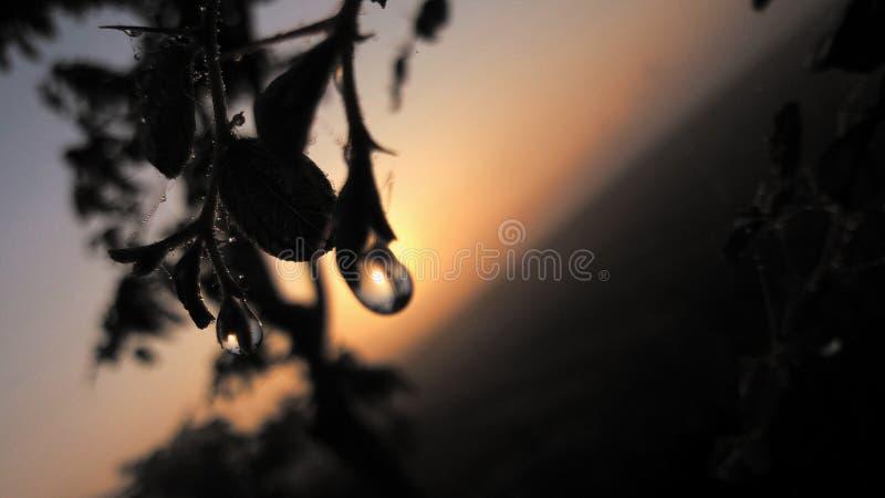 Капелька или падения воды на разрешении с солнцем позади стоковая фотография rf
