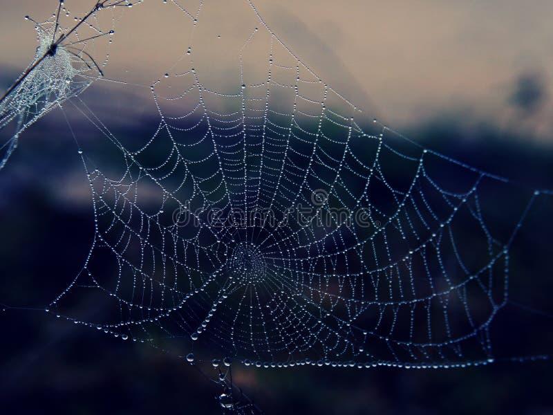 Капелька воды на Spiderweb на зиме рано утром стоковые фото