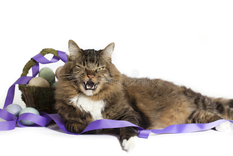 Капризный кот с корзиной пасхи стоковая фотография
