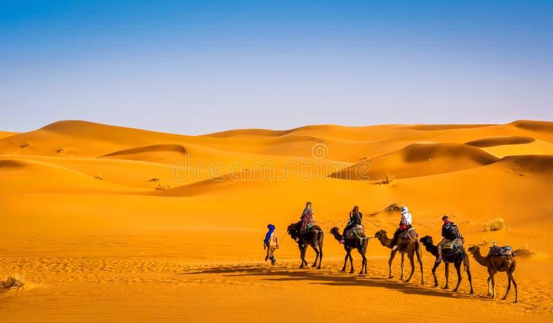 Караван верблюда идя через песчанные дюны в красивой пустыне Сахары Изумляя природа взгляда Африки o : стоковые фото