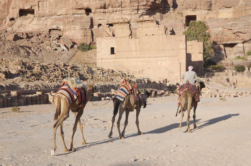 караван cameles стоковые изображения