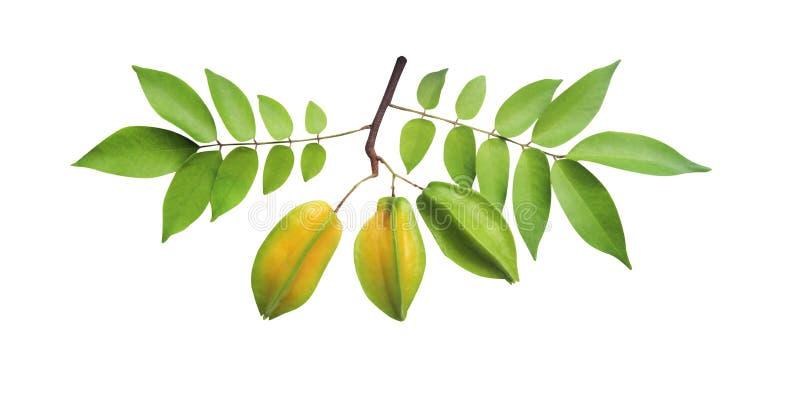 Карамбола звезды или карамбола averrhoa со стержнем и зеленой картиной листьев изолированными на белой предпосылке с путем клиппи стоковая фотография rf