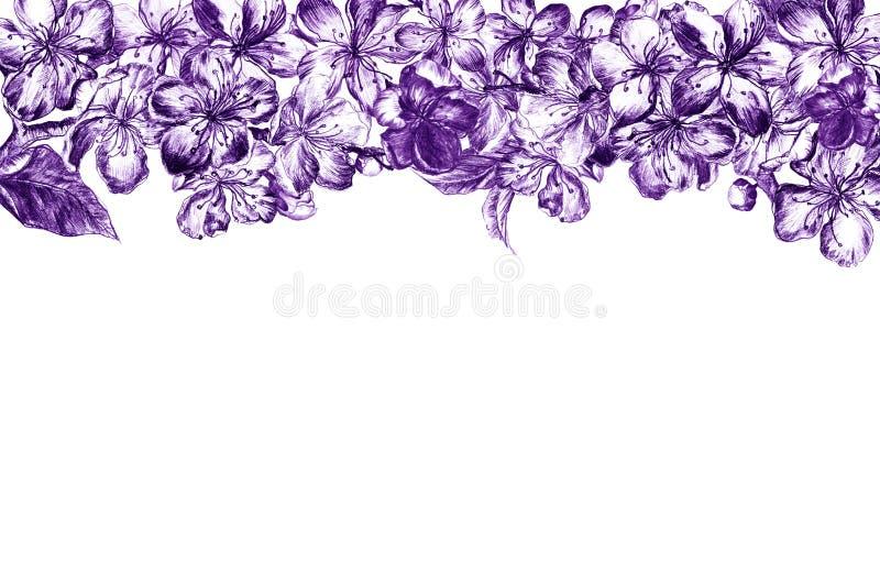 Карандаш угля руки вычерченный окаймляя фиолетовые цветки цветений и листьев pulm, лепестков и бутонов в винтажном стиле на a стоковое фото rf