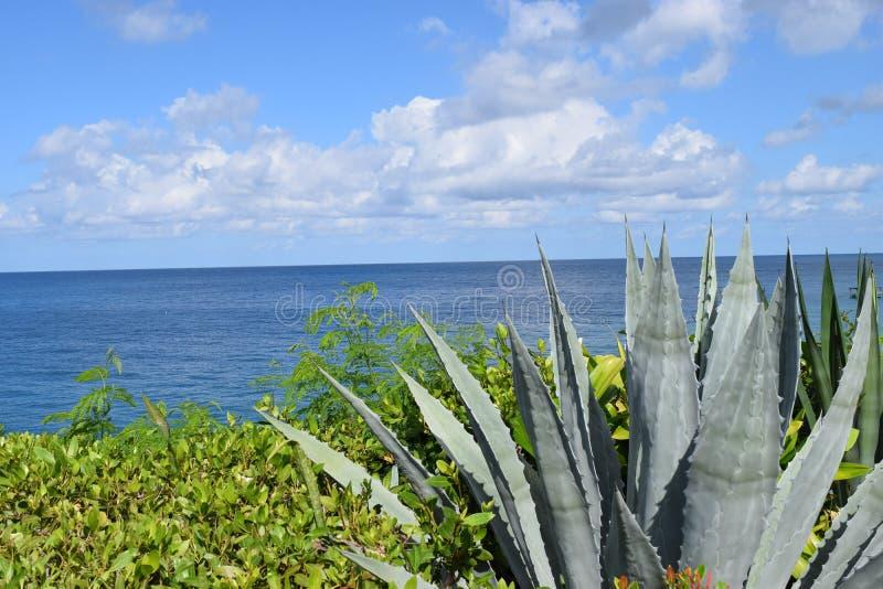 Карибские небеса стоковое фото rf