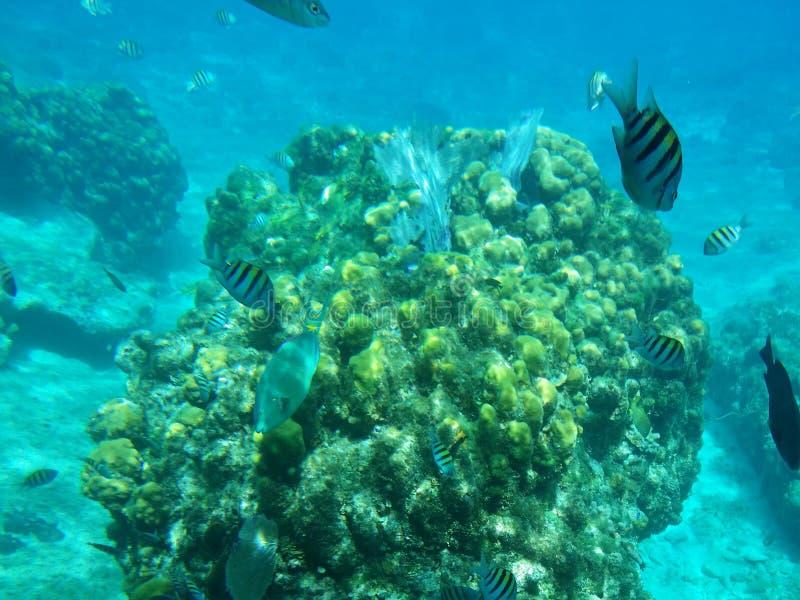 Карибские рыбы стоковые фото