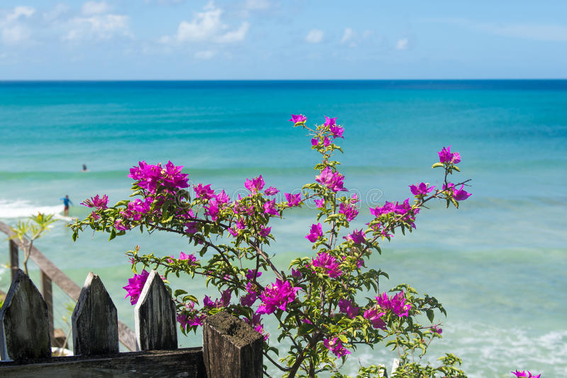 Карибский вид на океан стоковое фото